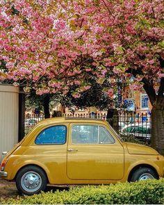 Small cars in Amsterdam   Awesome photo by @fallingoffbicyles  #Amsterdam #Netherlands #europe #amsterdamworld #iamsterdam #ilovethiscity #iloveholland #Holland #amstergram #vscoamsterdam #vscogood #vscocam #vsco #Instaamsterdam #night #city #citylife #citylights