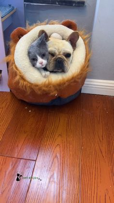 Funny Dog Beds, Cute Funny Dogs, Cute Funny Animals, Cute Cats, Dogs Video, Cat Video, Animal Antics, Animal Jokes, Cute Animal Videos