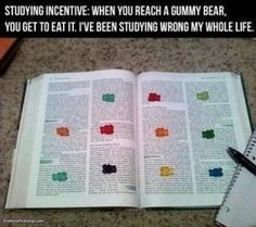gummy bear studying
