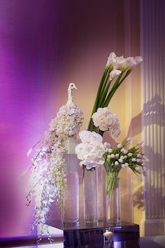 White floral peacock - beautiful! #TheGardenGate #EdmonsonPhotography #DFWEvents