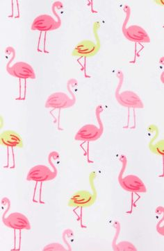 03d92a0457fd8 339 Best flamingo images in 2019   Flamingo, Flamingos, Flamingo bird