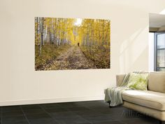 Gunnison National Forest, Colorado, USA Prints by Jamie