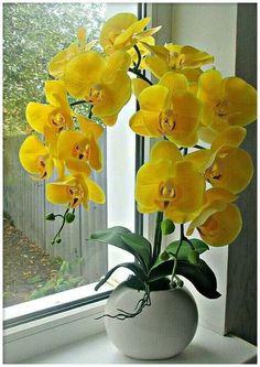 Garden Flowers - Annuals Or Perennials Orchids