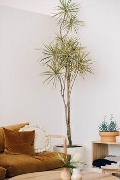 P&S DREAMER COUCH PLUSH Pop And Scott, Dracaena Plant, Timber Slats, Decoration Plante, Planted Aquarium, Green Life, Interior Exterior, Container Plants, Green Plants