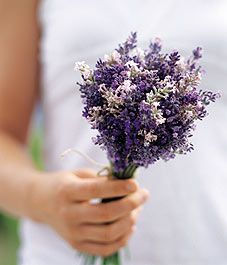 """In the Middle Ages, it was considered an aphrodisiac."" Yowza! #lavender Pretty bouquet for a country or rustic wedding"
