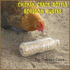 CHICKEN CRACK BOTTLES Use a drill bit to drill holes in empty plastic bottles, add chicken scratch (aka: chicken crack) and watch the fun break out! Provide several bottles to the flock at once to avoid conflict fowl penalties. - Gardening Go Backyard Chicken Coops, Chicken Coop Plans, Building A Chicken Coop, Diy Chicken Coop, Chickens Backyard, Chicken Feeders, Chicken Swing, Chicken Tractors, Chickens In Garden