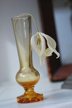 dry flower tulip チューリップのドライフラワー