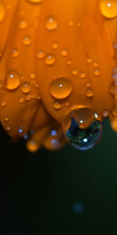 Orange Raindrops on flower petal. Dew Drops, Rain Drops, Water Photography, Levitation Photography, Exposure Photography, Autumn Photography, Drip Drop, Fotografia Macro, Orange You Glad