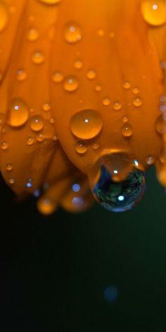 Raindrops on flower petal.