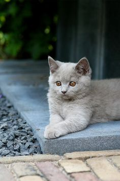 """""""The most domesticated of cats somehow contrives to lead an outside life of its own."""" --Katherine Briggs"""