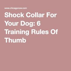 Shock Collar For Your Dog: 6 Training Rules Of Thumb