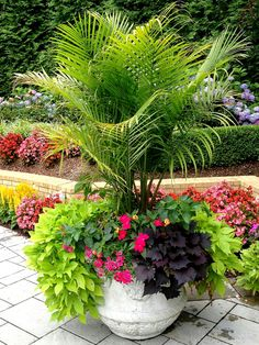 Photo about: Patio Plants In Pots Ideas, Title: Patio Plants In Pots Ideas Best 15 Stunning Summer Planter Ideas To Beautify Your Home, Description: . , Tags: patio plants, Resolution: x Tropical Patio, Tropical Gardens, Tropical Plants, Summer Plants, Colorful Plants, Pool Plants, Potted Plants Patio, Flowering Plants, Potted Palm Trees