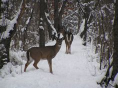 forest in winter | Westchester, IL : Winter in Westchester Forest Preserve - Sunnyside St ...