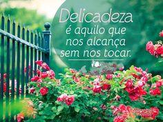 Delicadeza é aquilo que nos alcança sem nos tocar. #delicadeza #alcancar #tocar #delicado
