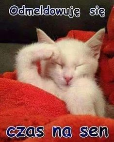 Good Night, Cute Cats, Memes, Funny, Pictures, Animals, Words, Nighty Night, Kawaii Cat