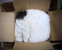 37 Cats who Don't Understand 'If I Fits, I Sits'!