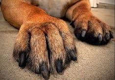 Krallen schneiden? Kein Problem für uns. Dogs, Animals, Animales, Animaux, Animal Memes, Animal, Pet Dogs, Dog, Animais