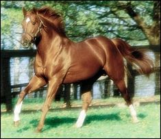 Only the greatest race horse to ever touch this earth!