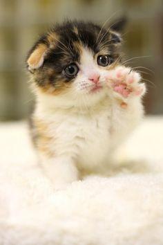 Aww my kitty