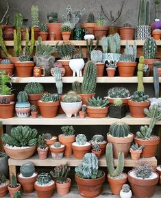 WEBSTA @ arnhem_clothing - Ultimate Cactus Shopping