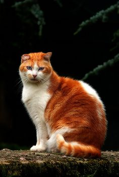 Cute Cats And Kittens, Cool Cats, Kittens Cutest, Cute Animal Memes, Cute Funny Animals, Pretty Cats, Beautiful Cats, Orange Tabby Cats, Cat Photography