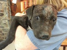 Compassionate Anniston cops rescue puppy 'bait dog' victim of dog fighting