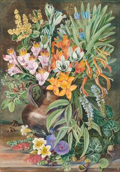 Some Wild Flowers of Quilpue Chili. print by Marianne North from Kew - home to the world's largest collection of botanical art. Botanical Flowers, Botanical Prints, Tropical Flowers, Plant Illustration, Botanical Illustration, Beautiful Paintings Of Flowers, Marianne North, Victorian Paintings, Bouquet
