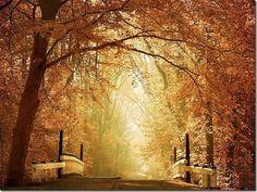 lovely trees