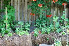 The Byron Life: A Beginners Guide to Straw Bale Gardening