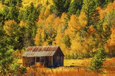 Fall at Hope Valley near South Lake Tahoe. Magical autumn colored leaves against an old barn.