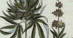The secret ways women used pot throughout history, and some still do today...at least the lucky ones.
