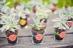 Succulent guest favors, potted in shot glasses. A dual purpose wedding favor!