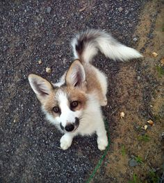 Funny pictures about Canadian Marble Fox. Oh, and cool pics about Canadian Marble Fox. Also, Canadian Marble Fox photos. Animals And Pets, Baby Animals, Funny Animals, Cute Animals, Cute Creatures, Beautiful Creatures, Animals Beautiful, Cute Fox, Tier Fotos