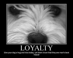 Wee Westie - Loyal Dog | Flickr - Photo Sharing!