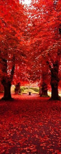Red Autumn leaf show