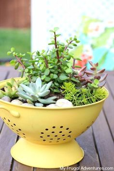 Easy Diy Garden Projects You'll Love Diy Gardening, Succulent Gardening, Cacti And Succulents, Garden Planters, Planting Succulents, Indoor Garden, Organic Gardening, Container Gardening, Indoor Plants