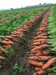 Md shohag hossain: When you look at a really eye-catching vegetable garden you […]