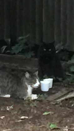 Mary Notarino Robinson‎East Haven Animal Shelter 1 hr near East Haven  ·   https://www.facebook.com/EastHavenAnimalShelter/posts/1407356552624616 Black cat been in my neighborhood since March. Neighbors and I been feeding and giving water daily. Anyone missing a cat?