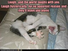 funny animals with captions | Funny+Animal+Pictures+with+Captions+(1).jpg