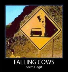 Falling cows!