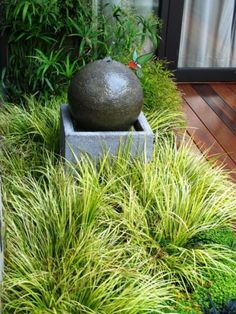 """Golden sweet flag: Acorus gramineus or """"Ogon"""" is one of relatively few ornamental grasses happy in partial or even full shade."""