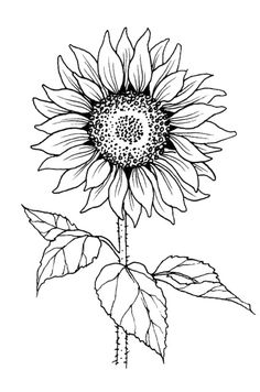 Pencil Art Drawings, Easy Drawings, Drawing Sketches, Sunflower Drawing, Sunflower Tattoos, Sunflower Stencil, Sunflower Pattern, Art And Illustration, Outline Images
