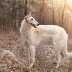 Dogs 16 #Dog #dogs #animal #animals #nature #paw #photo #photography #fliiby #images #yyazilim #people #nature