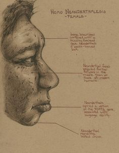 Another Neanderthal study from last week, just a quick anatomical study of the female neanderthal face (Profile)