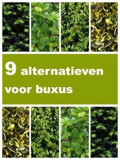 Plants, Garden, Outdoor, Garden Privacy, Terrace Garden, Shrubs, Landscape, Deck Enclosures, Buxus