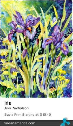 Iris by ann nicholson  buy her prints at fineartamerica.com
