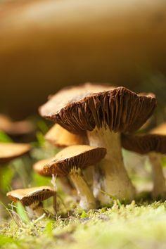 Macro capture of a group of mushrooms....photo by DebraLee Wiseberg