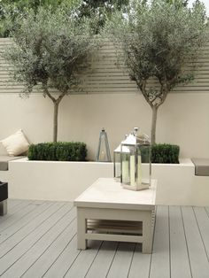 olive trees in courtyard. Evergreen, soft grey tones, hardy and easily shaped.