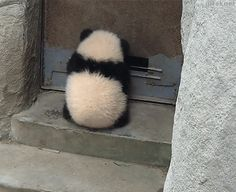 Watch Panda ninja Animated Gif Image. Gif4Share is best source of Funny GIFs, Cats GIFs, Dogs GIFs to Share on social networks and chat.