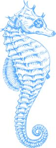 Blue Seahorse clip art